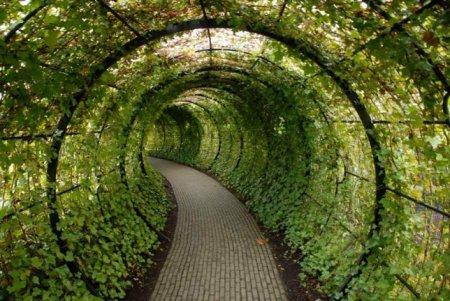 Ядовитый сад Альнвика