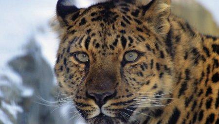 Национальный парк Земля леопарда